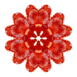 Mandala made of moon blood symbolizing menstrual health